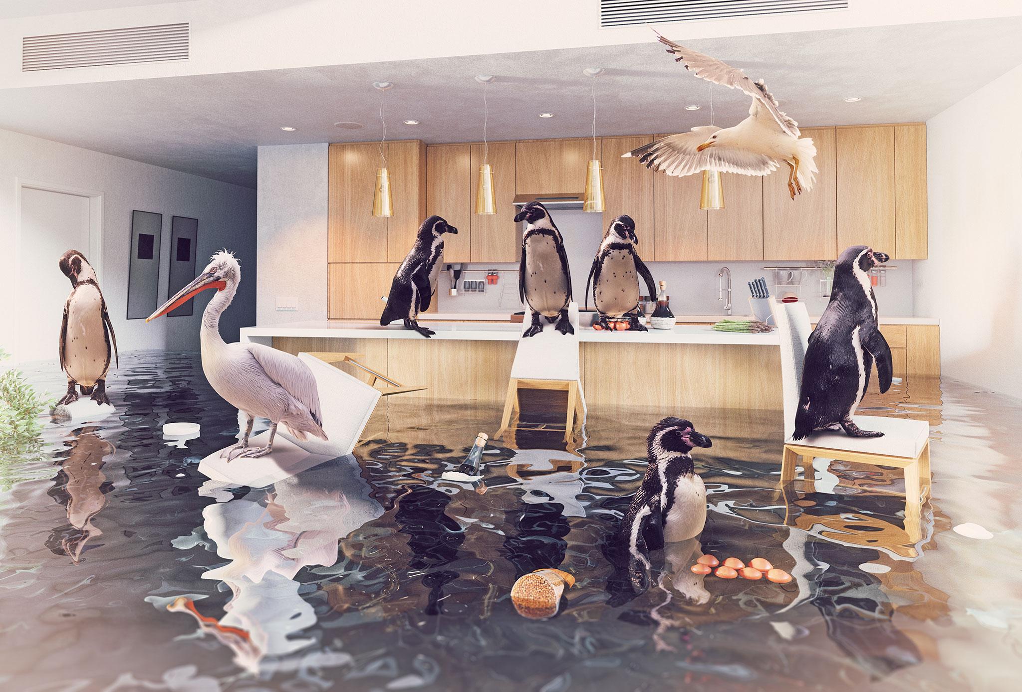 Wasserschaden in der Küche und im Wohnbereich